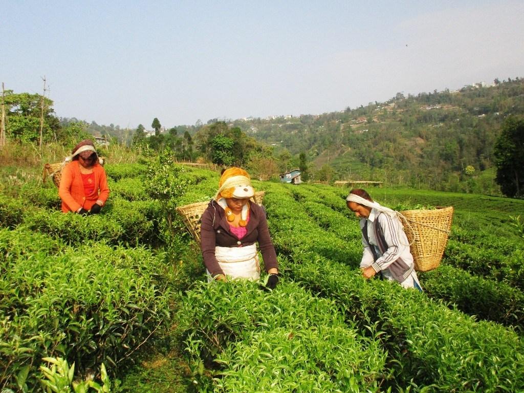 प्रदेश एकको उन्नती कार्यक्रम नारामै सिमित, विचौलीयाको विगविगी—किसान मारमा