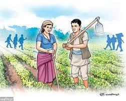 कृषिमा बजेटको खोलो, बास्तविक किसानसम्म योजनै पुग्दैन, नक्कली कृषककै मोज